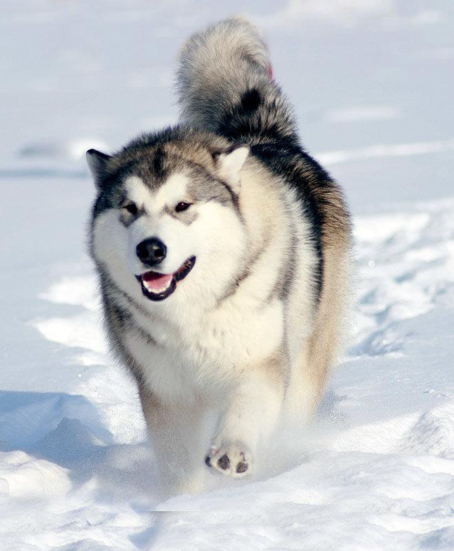Такие разные породы собак. ЧАСТЬ 2 - Кошачьи заметки