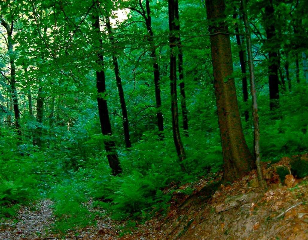 лиственный лес картинки для презентации