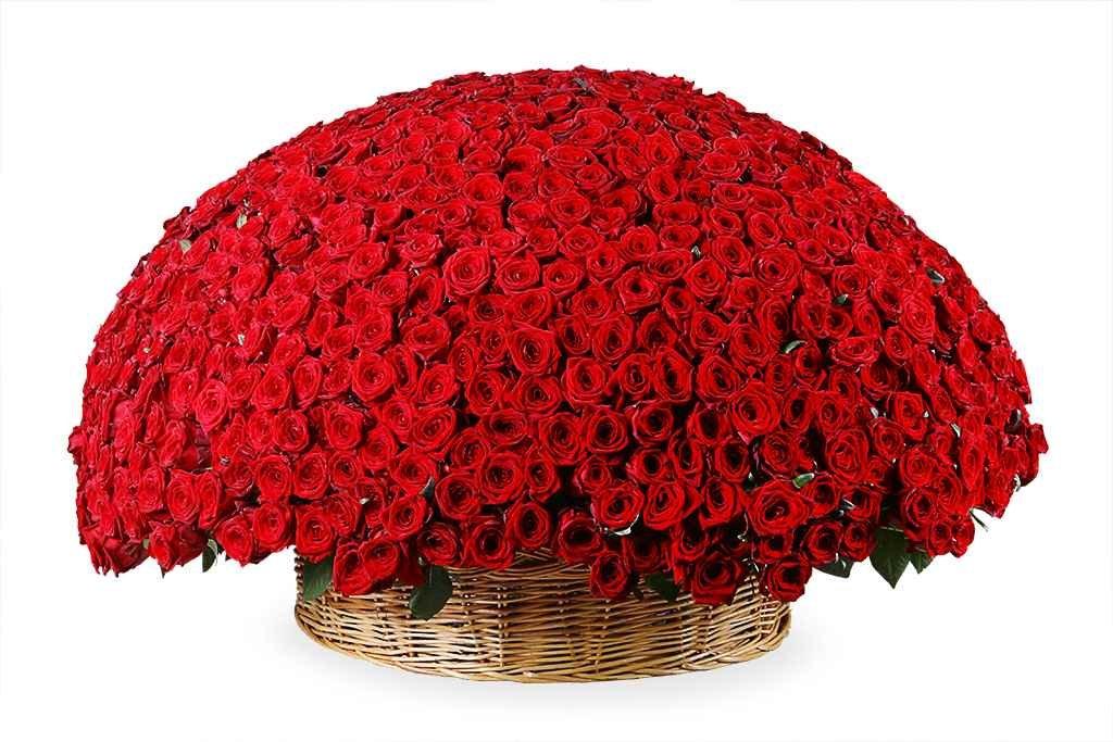Открытки с миллионом роз, прикольный картофель