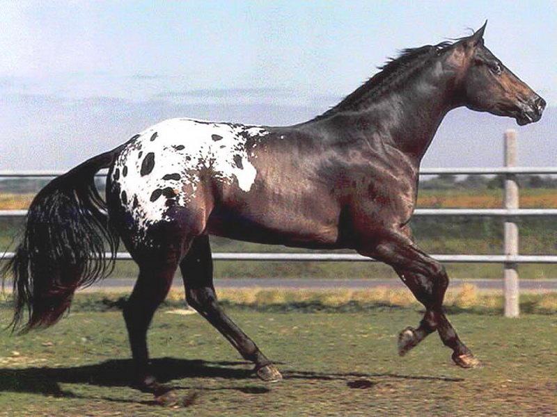 упругие породы лошадей фото с названиями по алфавиту нежелательной беременности