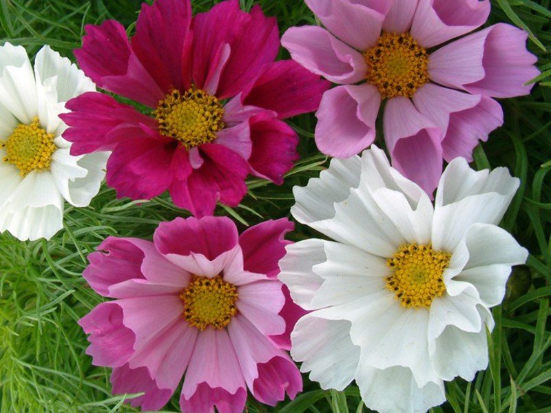 Садовые цветы купить спб