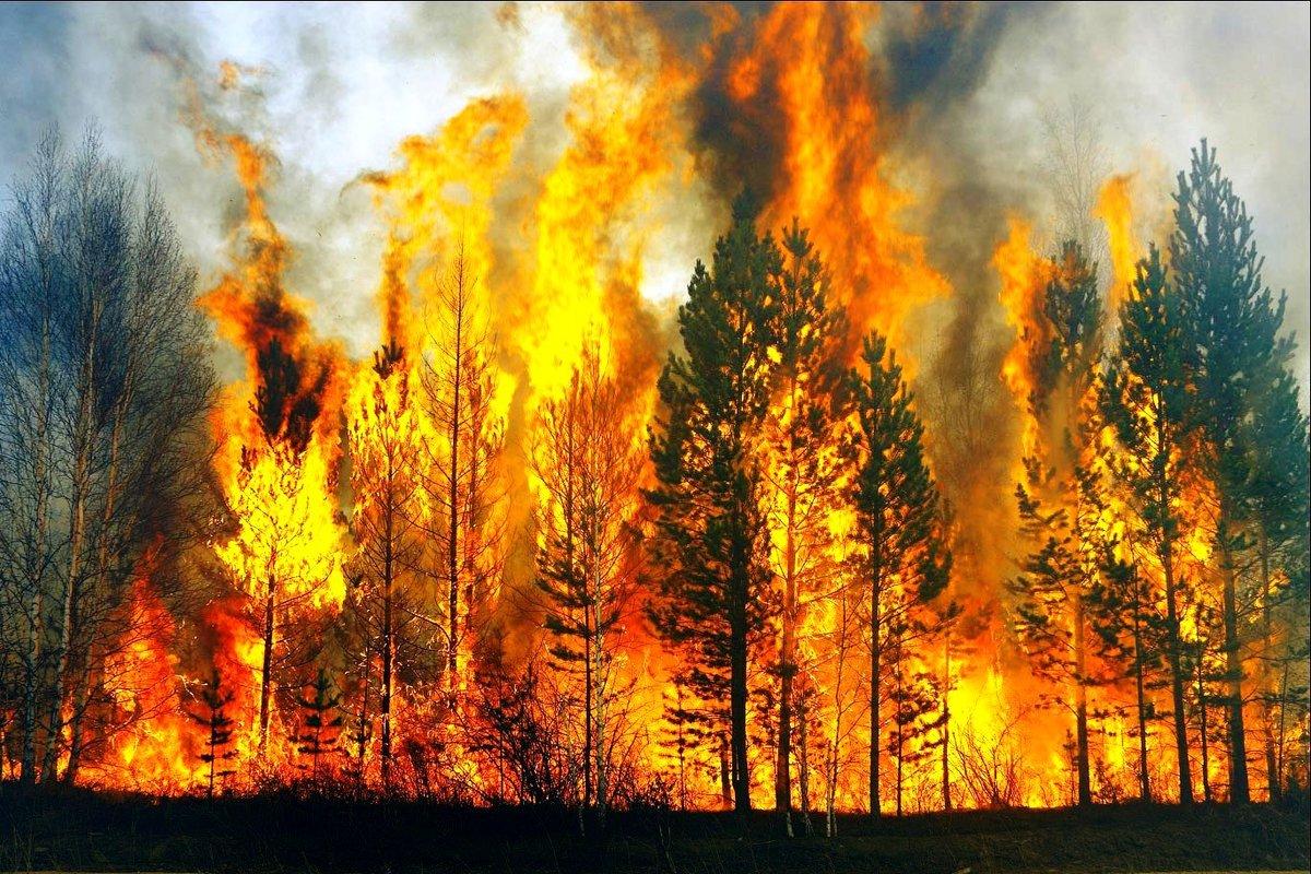 ним фото пожар в лесу нони помогает бороться