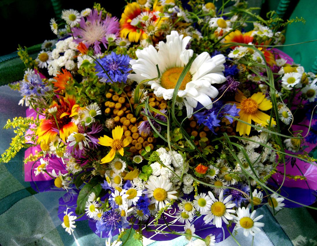 Цветки ирги свойства