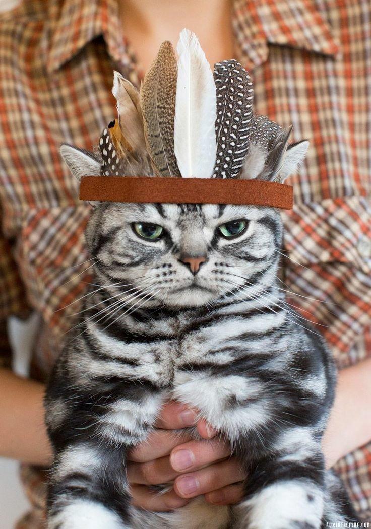 Прикольные картинки для поднятия настроения с котами, день имени картинки