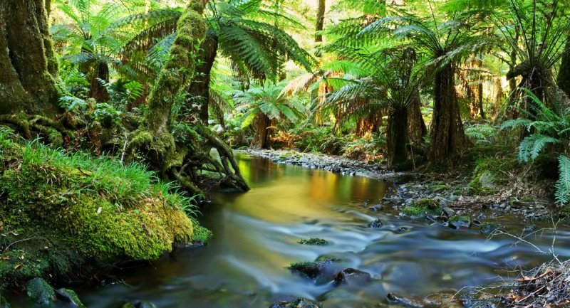 a description of jungle and rainforest as terms used synonymously but with little precision On average, a tropical rainforest is about 80°f (26°c) and has little daily or seasonal variation in temperature in addition, tropical rainforests have an average of 100 inches (254 cm) of precipitation annually.