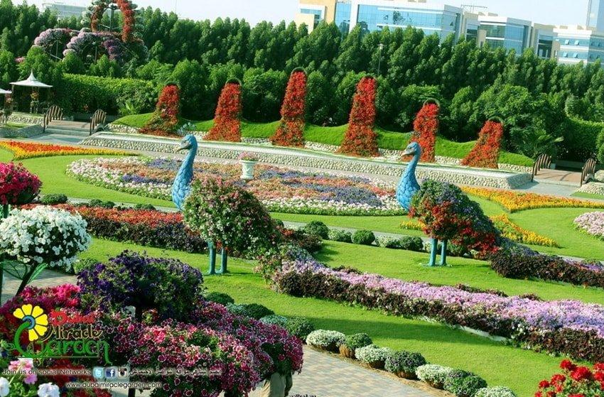 Картинки красивые сады