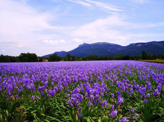 фото в поле цветов