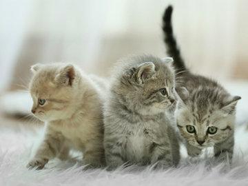 Милые и пушистые котята — в Яндекс.Коллекциях. Смотрите фотографии красивых котят разных пород