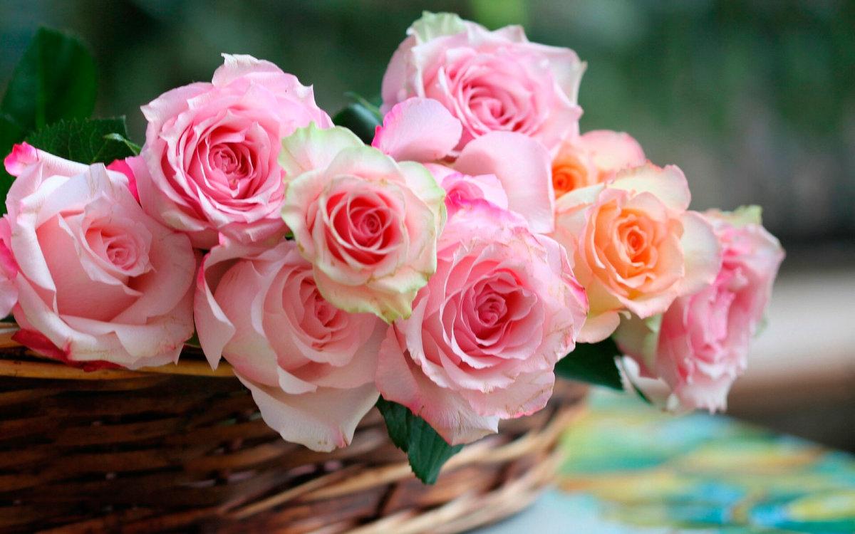 Нежные розы картинки красивые, поздравительные открытки день