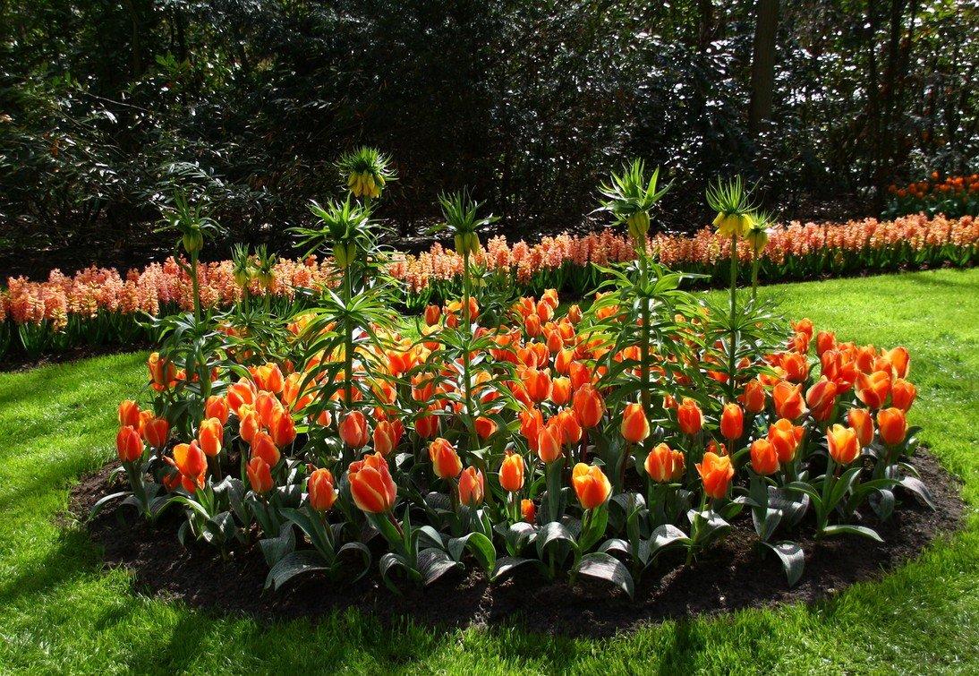 клумбы с тюльпанами и нарциссами фото созданным