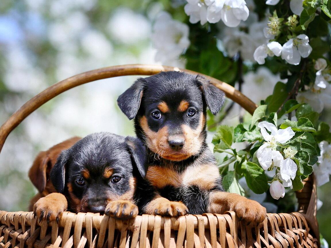 Открытки щенков
