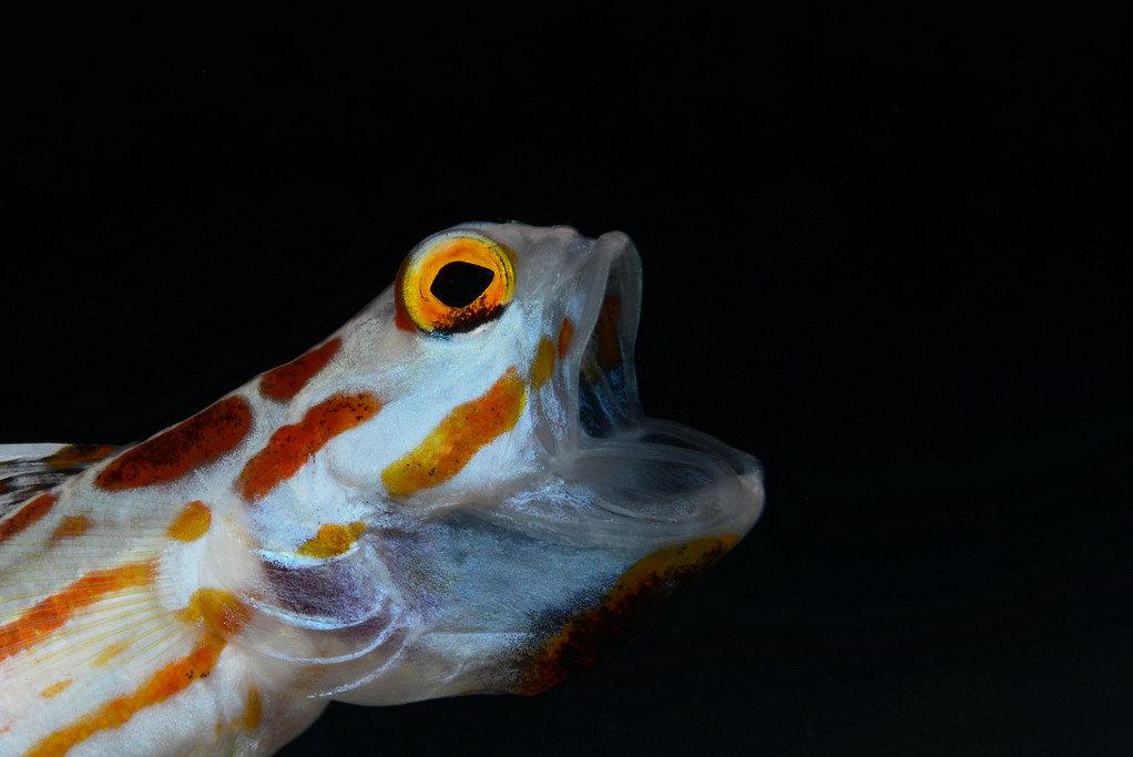 картинки рыба с открытым ртом сделаны время проведения