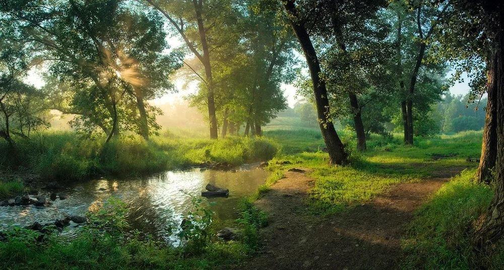 Открытки утро в лесу