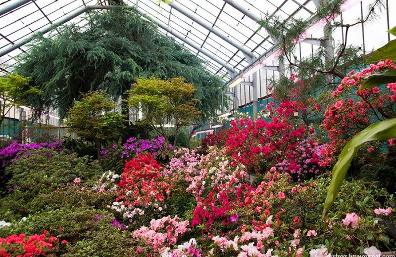 отличные оранжерея в ботаническом саду в москве клинической медицине