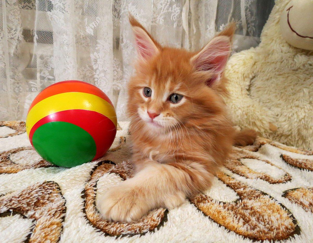 Картинка озорные котята