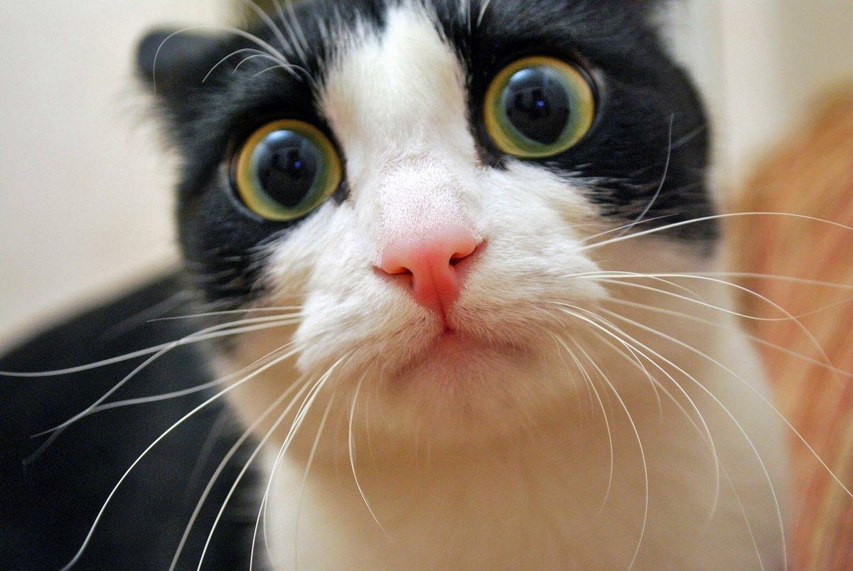 Картинки смешные кошка, омску открытки юбилеем