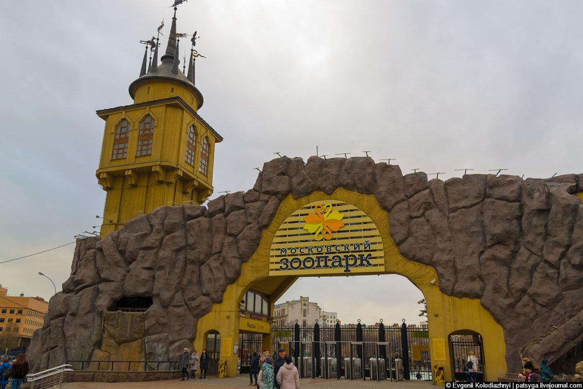 Московский зоопарк картинки, марта открытка бумаги