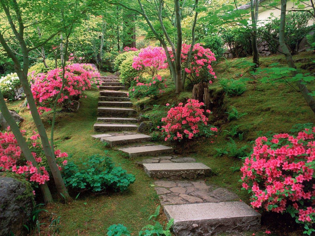 Azaleas Japanese Garden Wallpapers