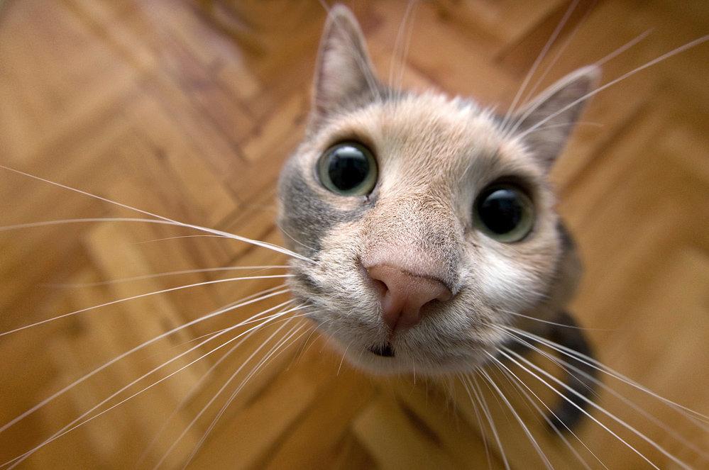 Прикольные картинки с котами и видео