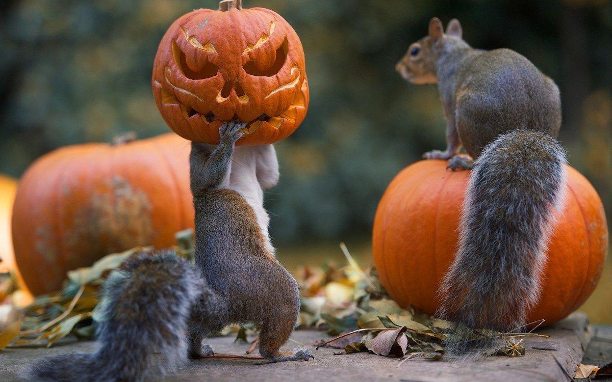 Животные, белки, хэллоуин