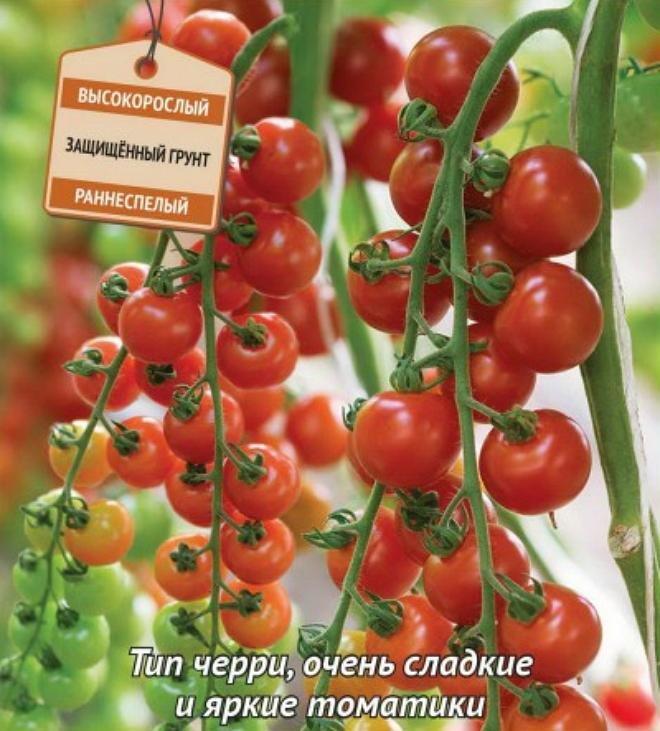 сорта помидор для теплиц с картинками