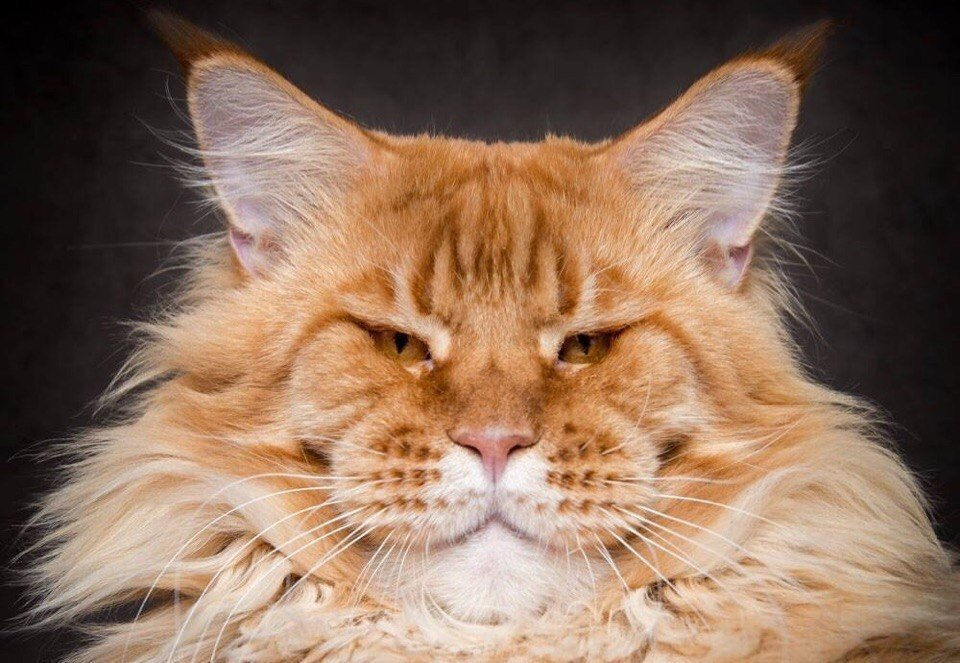 огромные картинки с котиками