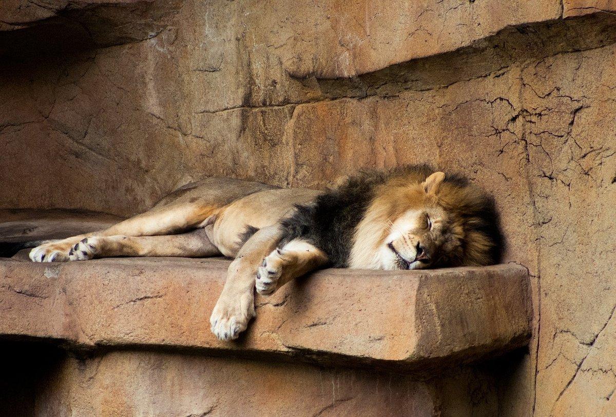 Спят животные фото