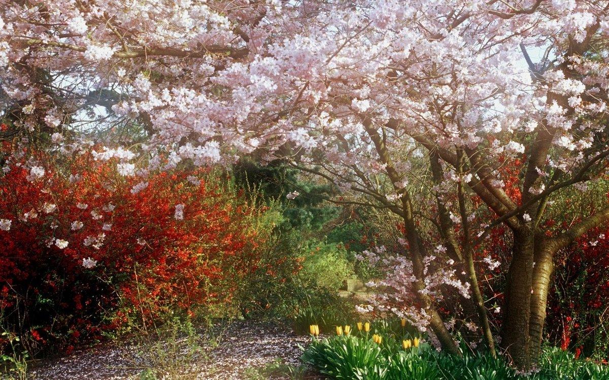 нас цветение в темном углу сада фото гаррель французский