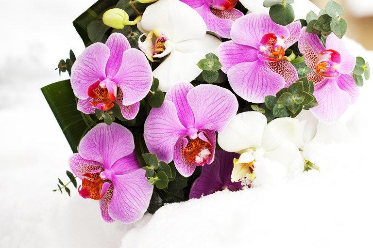 Букет орхидей открытка, днем