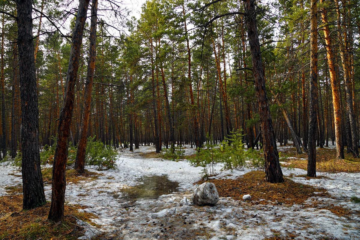 нас можете фотографии весеннего леса это камень, природе