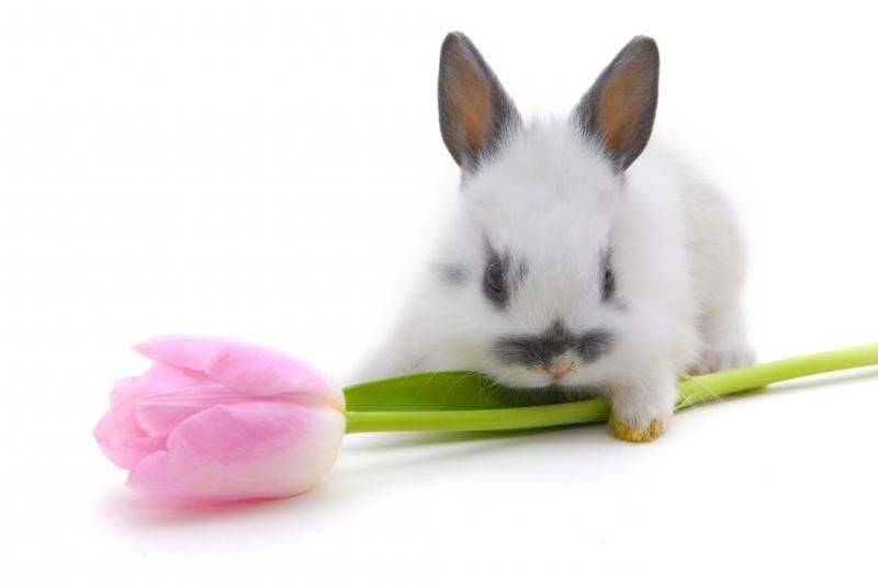 Поздравительная открытка кролика, открытки