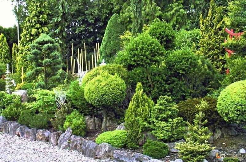 74Композиции растений в ландшафтном дизайне на