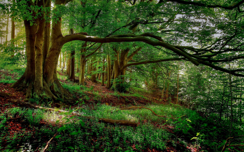 枝が途中で曲がっている樹木画像