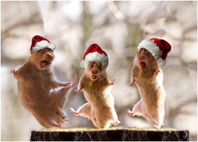 Картинки приколы новогодние, светлым воскресеньем открытки