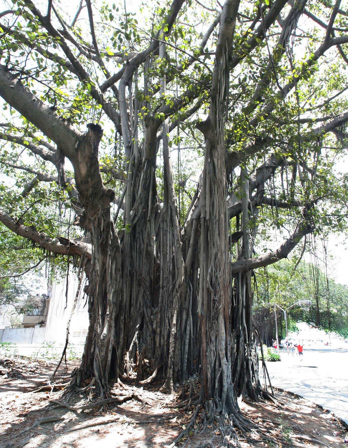 нулевых фото и названия деревьев кубы защитит