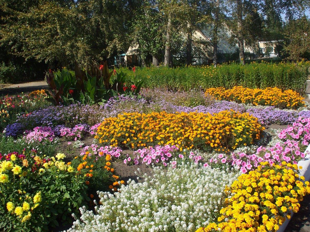 Растения в цветах с названиями
