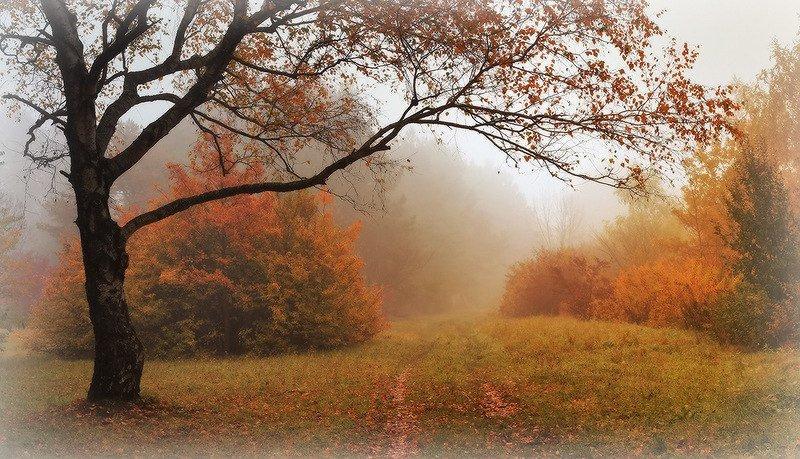 Красота природы повышает жизненный тонус и успокаивает нервную систему. ПроÑлада леса, гармония звуков, красок и запаÑов особенно приятны человеку. При первой же возможности идите в лес!