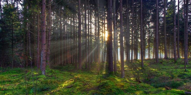 Картинки по запросу о будущем леса