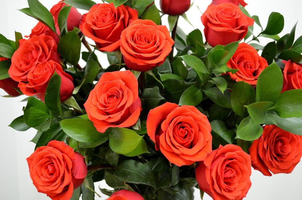 Красивые открытки розы алые