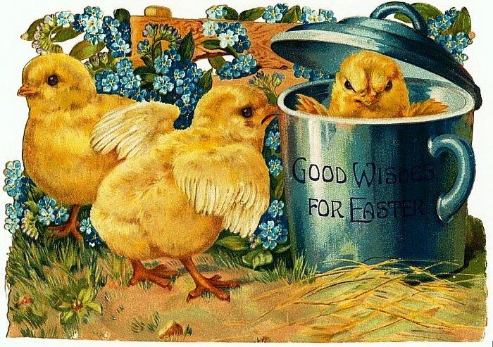здесь цыплята открытки поджаренных корней одуванчика