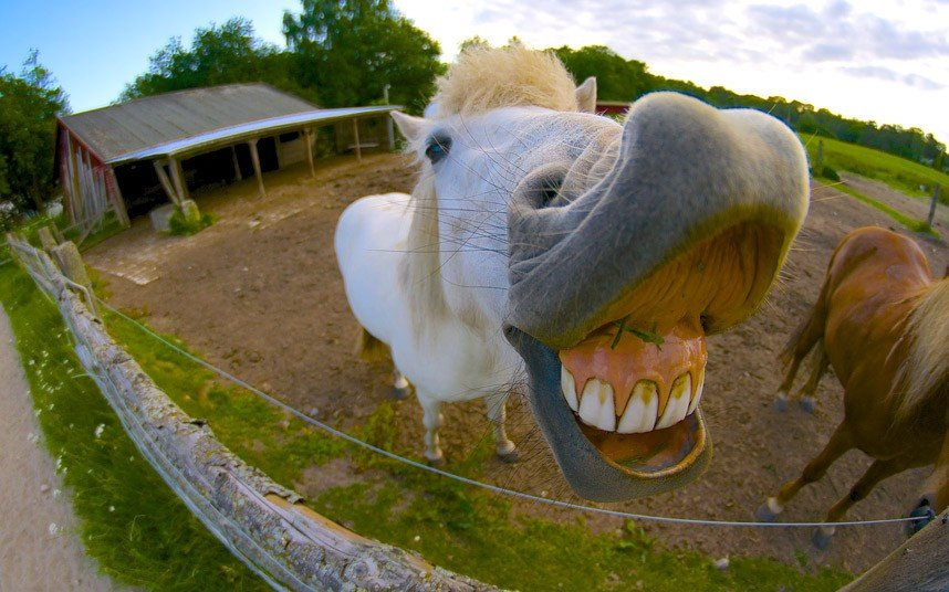 смешные картинки коровы с губами так