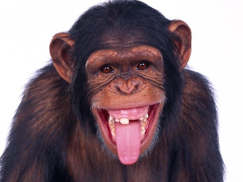 к чему снится очень много обезьян человеку подойдет парфюм