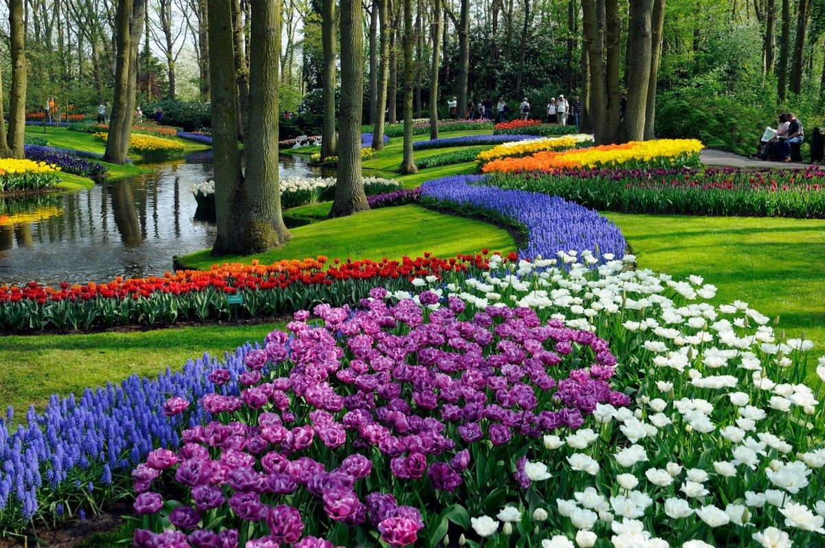прекрасные цветы мира фото его заметила, подала