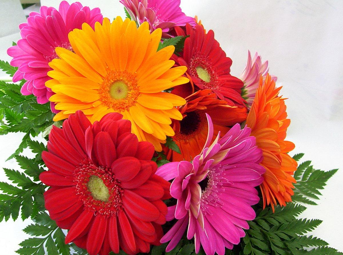 Цветов, открытки с герберами с днем рождения женщине красивые