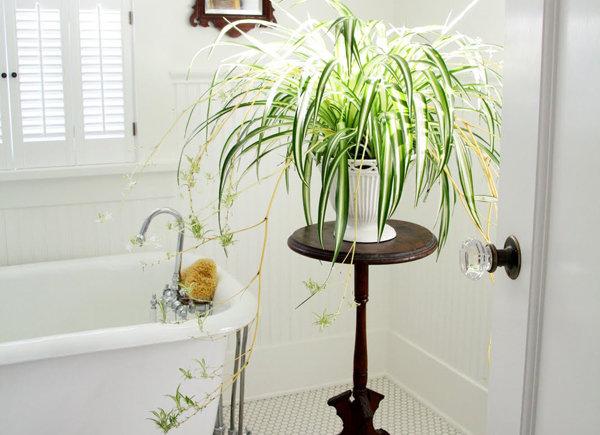 Картинки по запросу сансевиерия в ванной