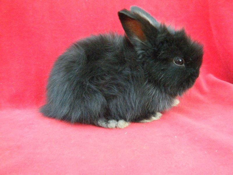 видео черно белых кроликов