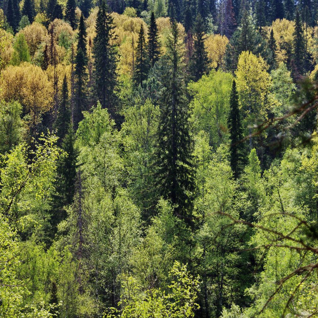 семь картинки тайга лес этого