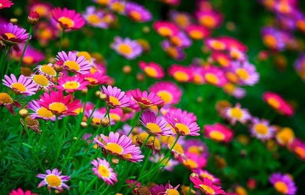 Красивые цветы на рабочий стол лето природа цветы