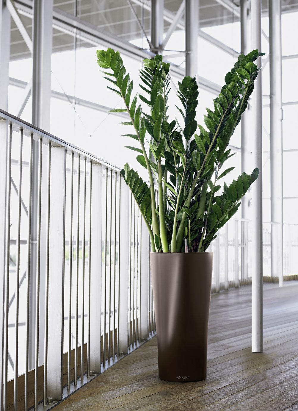 правило, большие офисные растения фото и названия бы, роскошная жизнь