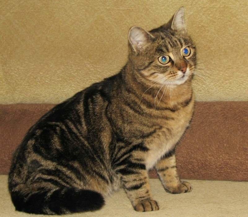 Много фото одного кота
